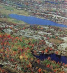 Aerial View of Torrence Barrens DSP
